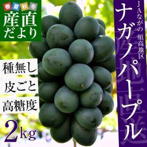 長野県より産地直送 JAながの(須高地区)ナガノパープル 約2キロ 4から5房  ぶどう ブドウ 葡萄|sanchokudayori