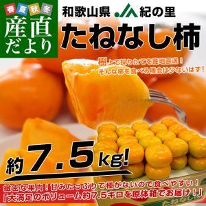 和歌山県より産地直送 JA紀の里 たねなし柿 2LからLサイズ 7.5キロ(32玉から36玉)カキ 刀根柿 平核無柿 とねがき ひらたねなしがき|sanchokudayori
