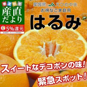 愛媛県産 JAえひめ中央 はるみ ご家庭用 3LからMサイズ 5キロ (18から35玉前後) 送料無料 柑橘 オレンジ 市場スポット|sanchokudayori