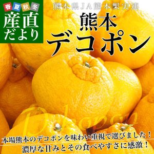 東京都大田市場より直送します。  商品名:デコポン 2LからLサイズ  産地:熊本県 内容量:5キロ...