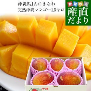 沖縄県より産地直送 JAおきなわ 完熟沖縄マンゴー 約1.5キロ (3玉から6玉入) 送料無料 まんごー アップルマンゴー|sanchokudayori