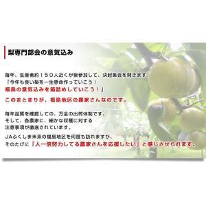 送料無料 福島県より産地直送 JAふくしま未来...の詳細画像4