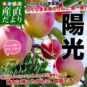 福島県より産地直送 JAふくしま未来「陽光」秀品 約2.8キロ(8玉から10玉) りんご 林檎 リンゴ  送料無料|sanchokudayori
