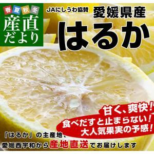 愛媛県より産地直送 JAにしうわ はるか LからMサイズ 5キロ (30から34玉)  送料無料 柑橘 オレンジ ハルカ 西宇和 八幡浜|sanchokudayori