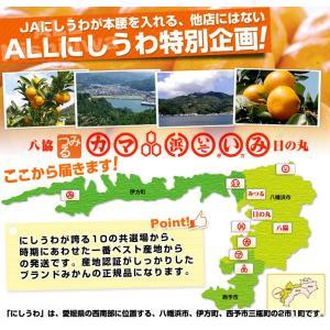 送料無料 愛媛県産 JAにしうわ 西宇和温州み...の詳細画像3