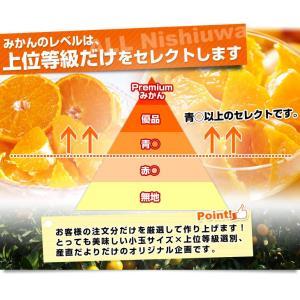 送料無料 愛媛県産 JAにしうわ 西宇和温州み...の詳細画像5