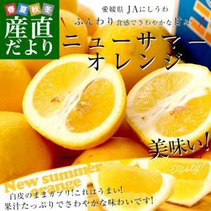 愛媛県より産地直送 JAにしうわ ニューサマーオレンジ 秀品 5キロ(25玉〜31玉) 送料無料|sanchokudayori