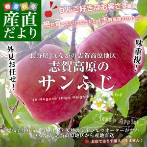 長野県より産地直送 JAながの 志賀高原のサンふじリンゴ ご家庭用 約5キロ (10玉から14玉) 送料無料 林檎 りんご リンゴ|sanchokudayori