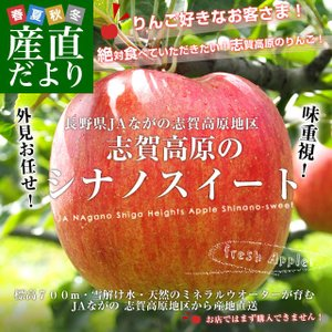 長野県より産地直送 JAながの 志賀高原のシナノスイート ご家庭用 約5キロ (10から18玉) 送料無料 林檎 りんご リンゴ|sanchokudayori