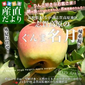 長野県より産地直送 JAながの 志賀高原のぐんま名月 ご家庭用約5キロ (10玉から14玉) 送料無料 林檎 りんご リンゴ めいげつ|sanchokudayori