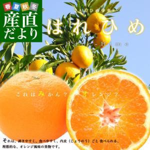 送料無料 愛媛県より産地直送 JAえひめ中央 はれひめ 2LからLサイズ 約5キロ(28玉から43玉)|sanchokudayori