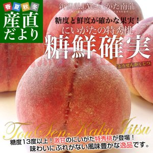 新潟県より産地直送 JAにいがた南蒲 にいがたの特秀桃「糖鮮確実 (とうせんかくじつ)」 3キロ (9玉から12玉) 送料無料 もも モモ|sanchokudayori