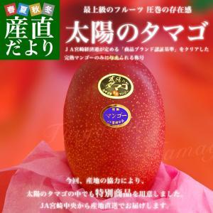 宮崎県より産地直送 JA宮崎中央 宮崎完熟マンゴー 太陽のタ...