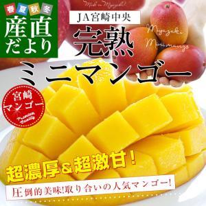 宮崎県より産地直送 JA宮崎中央 完熟ミニマンゴー 500g...