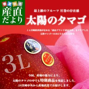 送料無料 宮崎県から産地直送 JA宮崎中央 完熟マンゴー「太...