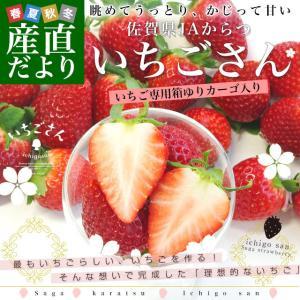 佐賀県より産地直送 JAからつ 新品種いちご いちごさん 苺専用箱ゆりカーゴ入り 450g (15粒から18粒) 送料無料 イチゴ イチゴさん うまかもん|sanchokudayori