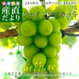 長野県産 シャインマスカット 合計1.2キロ(2房から3房) ぶどう 葡萄 JA中野市 JA信州うえだ JAながの 送料無料|sanchokudayori