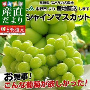 送料無料 長野県より産地直送 JA中野市 シャインマスカット 合計1.2キロ(2房から3房入り) ぶどう 葡萄|sanchokudayori