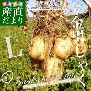 送料無料 北海道より産地直送 JA今金町のじゃがいも 今金男爵 Lサイズ 約10キロ 馬鈴薯 ジャガイモ 男爵|sanchokudayori