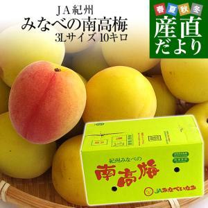 和歌山県産 JA紀州 みなべの南高梅 3Lサイズ 10キロ ...