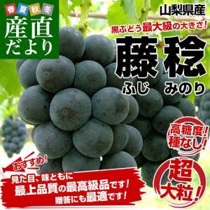 山梨県産 藤稔(ふじみのり) 1キロ以上(約500g×2房)葡萄 ぶどう 送料無料|sanchokudayori