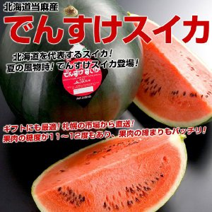 北海道当麻産 でんすけスイカ 3L(約8キロ)以上秀品