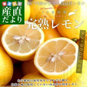 香川県から産地直送 JA香川県 完熟レモン 約5キロ (40玉から50玉前後) 送料無料  柑橘 檸檬 国産レモン|sanchokudayori