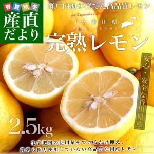 香川県から産地直送 JA香川県 完熟レモン 約 2.5キロ (20玉から25玉前後) 送料無料  柑橘 檸檬 国産レモン|sanchokudayori