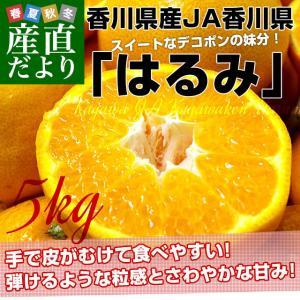 香川県より産地直送 JA香川県 はるみ Mから3L ちょっと訳あり 5キロ(12から28玉前後) 送料無料 柑橘 オレンジ ハルミ|sanchokudayori