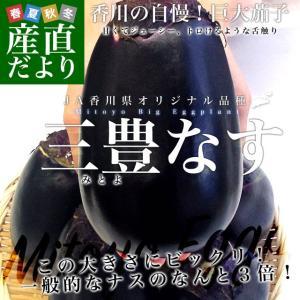 香川県から産地直送 JA香川県 巨大なナス「三豊なす」 約2キロ(4から6玉) 送料無料 茄子 なす ナス|sanchokudayori