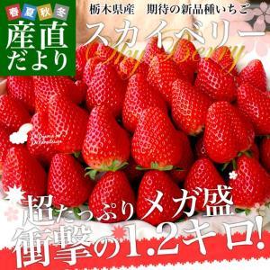 送料無料 栃木県産 新品種いちご スカイベリー 超大盛1.2...