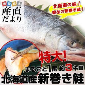送料無料 北海道産 新巻き鮭 <特大> 1尾 約3キロ  さ...