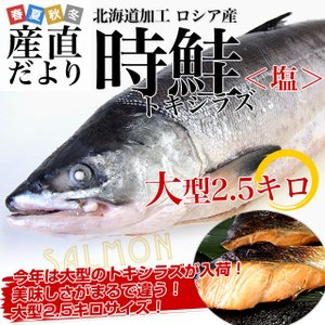 北海道から直送  北海道加工  時鮭(トキシラズ) まるごと1尾 大型2.5キロ (ロシア産) 送料無料 ときさけ トキサケ 冬ギフト |sanchokudayori