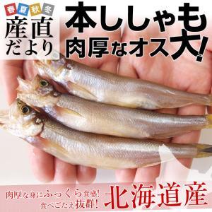 北海道産 本ししゃも 肉厚なオス 30尾入り化粧箱  送料無料 柳葉魚 本シシャモ|sanchokudayori