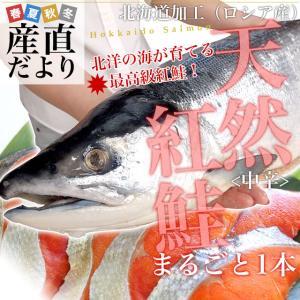 北海道より直送 北海道加工 天然紅鮭 <中辛> まるごと1本 1.6キロ以上(ロシア産) 送料無料 紅鮭 べにさけ シャケ 冬ギフト |sanchokudayori