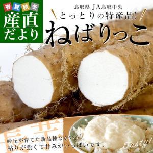 鳥取県より産地直送 JA鳥取中央 とっとりの特産品 新品種ながいも「ねばりっこ」(800g以上×3本入り) 送料無料 ナガイモ 長芋 とろろ|sanchokudayori
