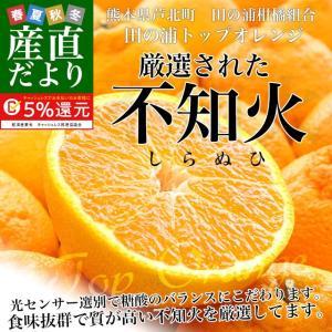 熊本県産 田の浦柑橘組合 トップオレンジ 不知火(しらぬひ) 3LからLサイズ 5キロ (18玉から24玉) 送料無料 しらぬい 柑橘 オレンジ 市場スポット|sanchokudayori