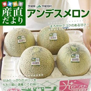 茨城県産 JA茨城旭村 アンデスメロン 4Lから3Lサイズ 5キロ箱 (3玉から4玉) 送料無料 市場スポット|sanchokudayori