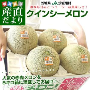 茨城県産 JA茨城旭村 クインシーメロン 4Lから3Lサイズ 5キロ箱 (3玉から4玉) 送料無料 市場スポット|sanchokudayori