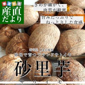 新潟県より産地直送 JA北越後 砂里芋(さりいも) 特大2Lサイズ 2.5キロ (30玉前後) 送料無料 里芋 さといも|sanchokudayori