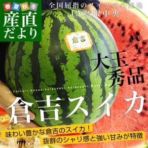 鳥取県から産地発送 JA鳥取中央 倉吉スイカ 秀品 大玉 3Lから4L  8キロ以上1玉 すいか 西瓜 送料無料|sanchokudayori