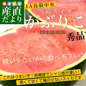 鳥取県から産地発送 JA鳥取中央 琴浦スイカ 「がぶりこ」 秀品 3Lから4L 8キロ以上1玉 すいか 西瓜 送料無料|sanchokudayori