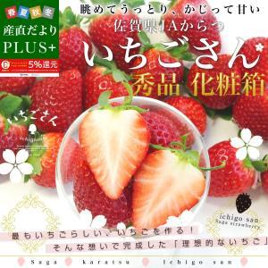 佐賀県より産地直送 JAからつ 新品種いちご いちごさん 秀品 3Lサイズ 500g化粧箱 20粒から24粒 送料無料 いちごサン 唐津 うまかもん|sanchokudayoriplus
