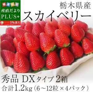 栃木県産 スカイベリー DXタイプ 2箱 合計1.2キロ (300g×4パック)  (6粒から12粒×4P) 送料無料 いちご 苺|sanchokudayoriplus