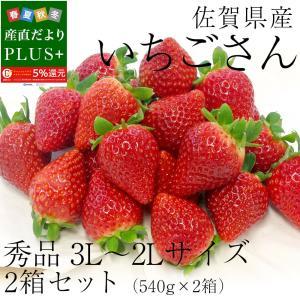 佐賀県産 新ブランド苺 いちごさん 秀品 3Lから2Lサイズ 2箱セット  (約540g×2箱) 送料無料 イチゴ|sanchokudayoriplus