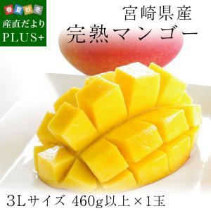 送料無料 宮崎県産 完熟マンゴー 3Lサイズ 460g以上×1玉 まんごー 夏ギフト2019 お中元ギフト|sanchokudayoriplus