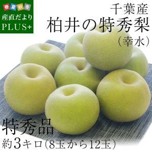 送料無料 千葉県産 柏井の特秀梨(幸水)約3キロ(8玉から12玉)  梨 なし 和梨|sanchokudayoriplus