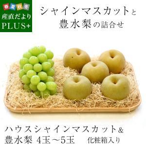 送料無料 シャインマスカットと豊水梨 詰合せ 化粧箱入り フルーツセット ぶどう なし|sanchokudayoriplus
