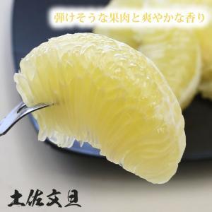 訳あり 土佐文旦 8kg 高知県産 ご家庭用|sancyokubin|02