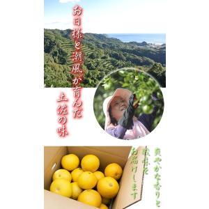 訳あり 土佐文旦 8kg 高知県産 ご家庭用|sancyokubin|03